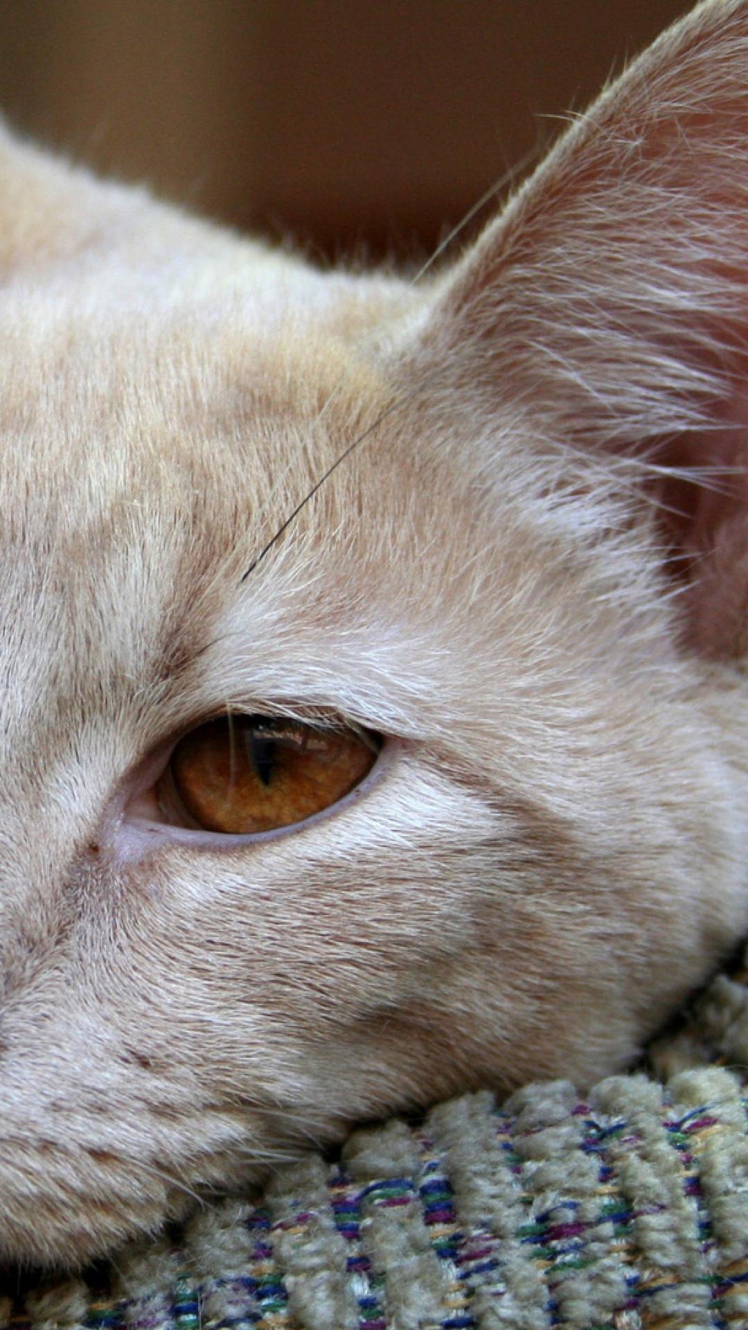 Чумка у кошек 13 фотография