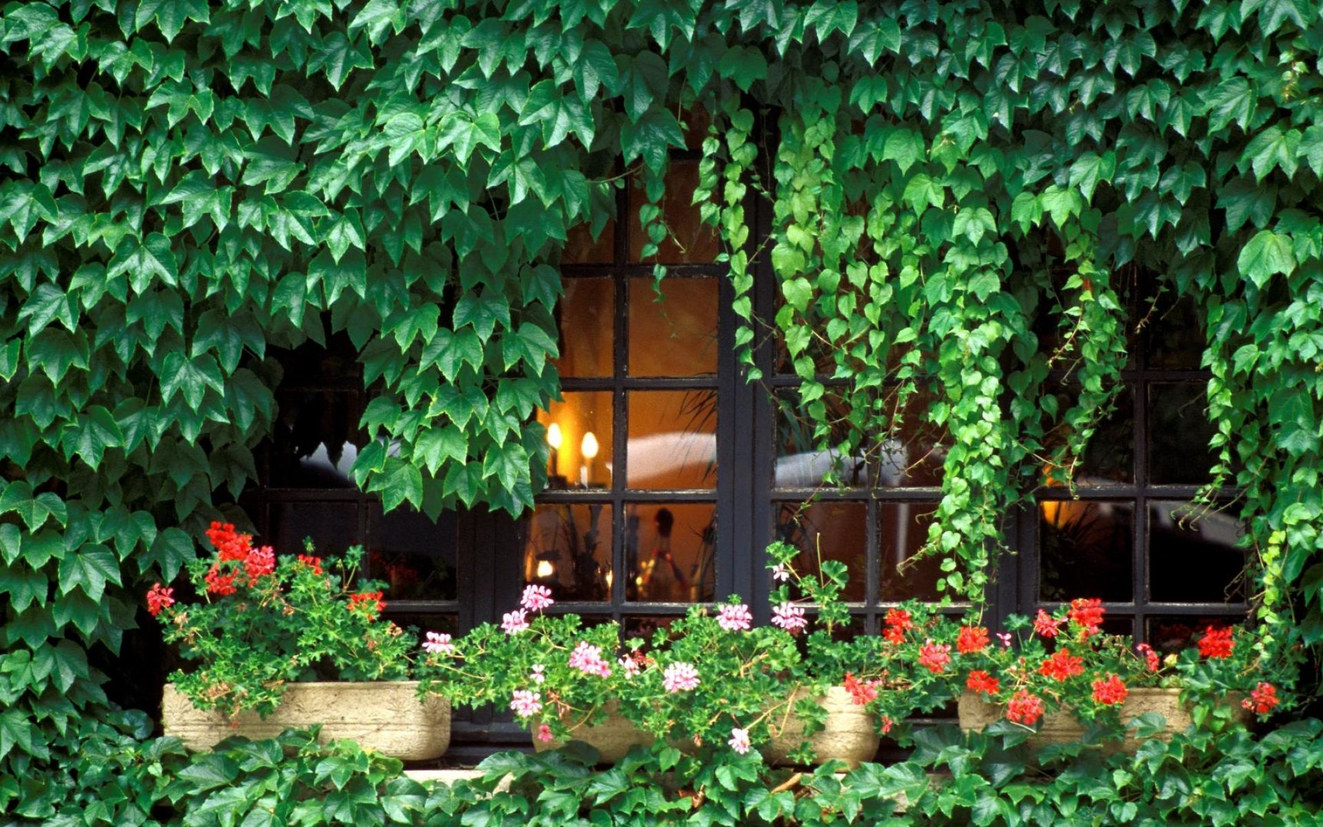 Фото вьющиеся многолетние цветы для сада