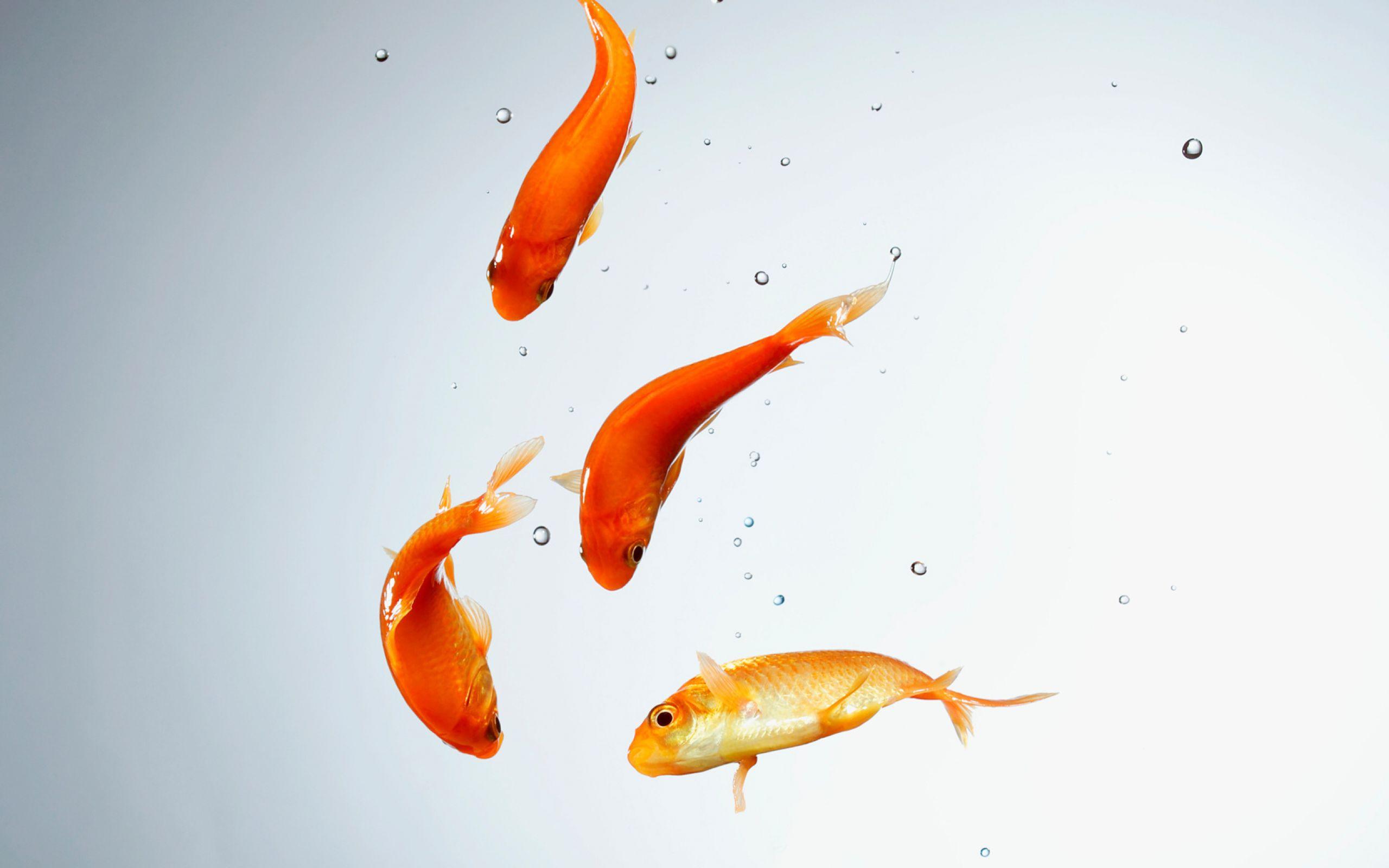 اموزش سبزه گندم تنگ ماهی Наурыз мерекесінің салт-дәстүрлері (1) - Pars Today